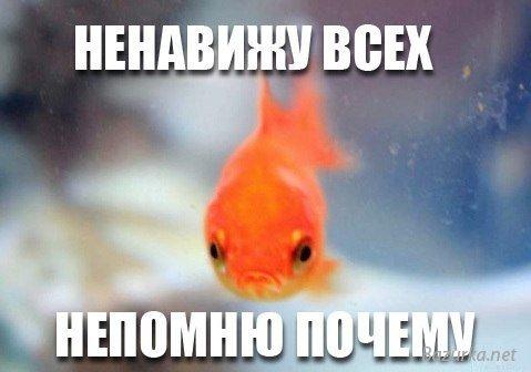 http://bazurka.net/uploads/posts/2013-01/1357128593_chernyy-yumor-23.jpg