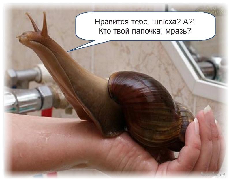 хентай с животными картинки: