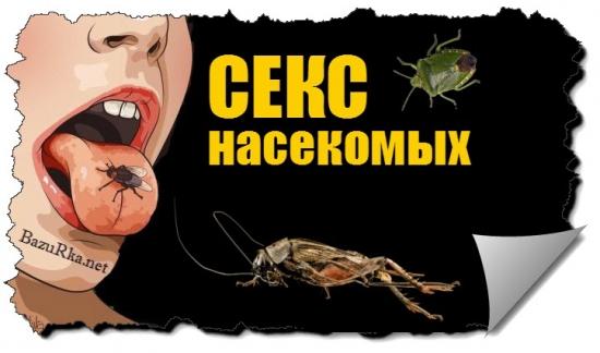 Секс у насекомых факты